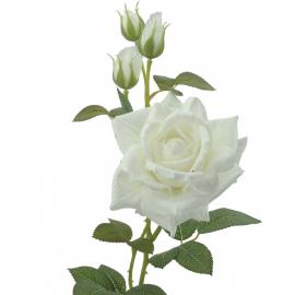 ROSE (T.N.)