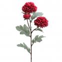 Crisantemos / Mum