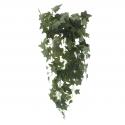 Plantas colgantes sin flor